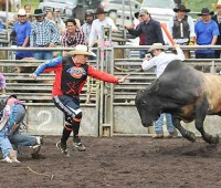 Bull fighter James MacGregor in red, distracts this charging bull while his partner, Judd Napier, at left, looks after the fallen bull rider at the Honokaa arena on May 27. The Hawaii Saddle Club and many local businesses sponsored the 56th annual Memorial Day Rodeo. (PHOTO BY JOCK GOODMAN, SPECIAL TO NHN)